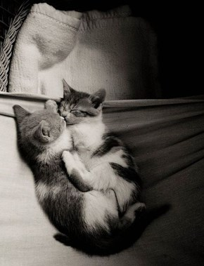Cyoot Kitteh of teh Day: Smooches