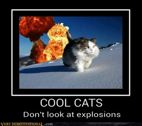 The Coolest of Cats