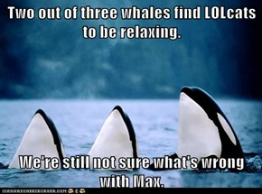 Two out of three whales find LOLcats to be relaxing.  We're still not sure what's wrong with Max.