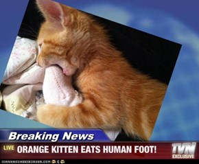 Breaking News - ORANGE KITTEN EATS HUMAN FOOT!