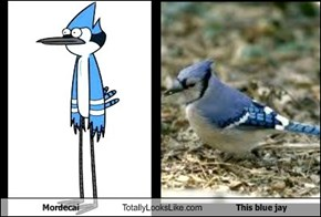Mordecai Totally Looks Like This blue jay