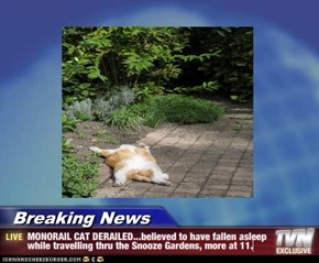Breaking News - MONORAIL CAT DERAILED...believed to have fallen asleep while travelling thru the Snooze Gardens, more at 11.