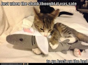 Just when the shark thought it was safe  to go back on the bed