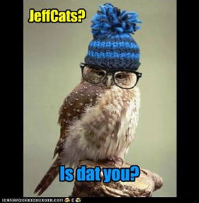 We've replaced your regular JeffCats wif an owl. Let's see if any bookclubbers notice the change.