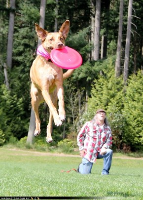 Dramatic Dog Catches Disc