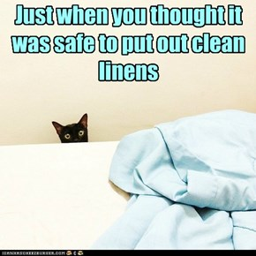 Just when you thought it was safe to put out clean linens