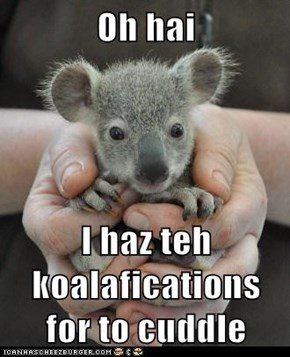 Oh hai  I haz teh koalafications for to cuddle