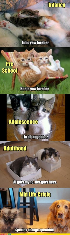 Kitteh Development
