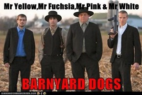 Mr Yellow,Mr Fuchsia,Mr Pink & Mr White
