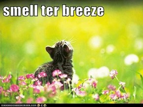 smell ter breeze