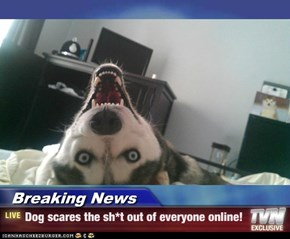 Breaking News - Dog scares the sh*t out of everyone online!