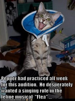 "Pepper had practiced all week for this audition.  He desperately wanted a singing role in the feline musical  ""Flea"" ..."