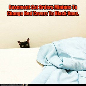 Basement Cat Orders Minions To Change Bed Covers To Black Ones.