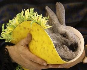 Bunday: Tacos con Conejos