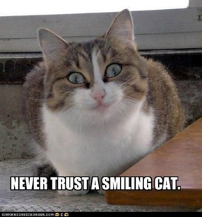 NEVER TRUST A SMILING CAT.