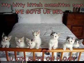 itty bitty kitteh committee says WE GOTS UR BED...  U KIN SLEPE ON FLOAR!