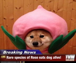 Breaking News - Rare species of Rose eats dog alive!