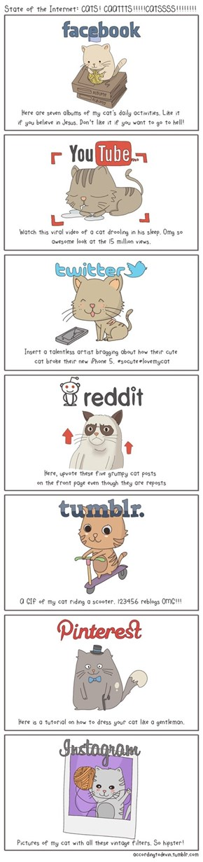 The State of the Internet: As Told Through Cats