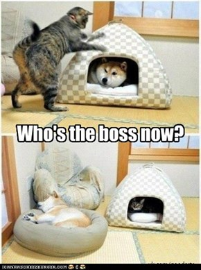 Who's the boss now?