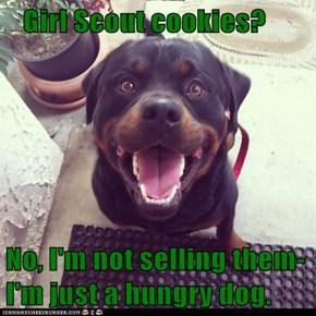 Girl Scout cookies?  No, I'm not selling them-I'm just a hungry dog.