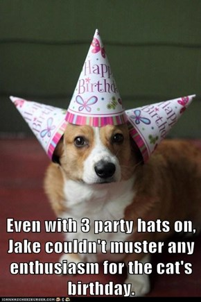 Even with 3 party hats on, Jake couldn't muster any enthusiasm for the cat's birthday.