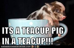 ITS A TEACUP PIG IN A TEACUP!!!