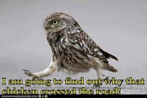 Determined Owl is Determined