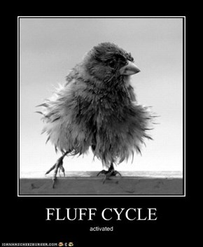 FLUFF CYCLE