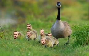 A Mother and Her Gosling