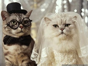 Are With the Bride or the Groom?