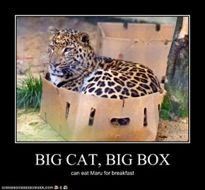 BIG CAT, BIG BOX