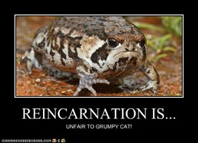 REINCARNATION IS...