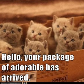 Hello, your package of adorable has arrived.