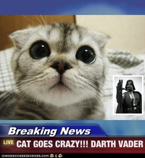 Breaking News - CAT GOES CRAZY!!! DARTH VADER