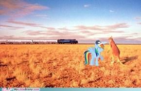 Outback Dash