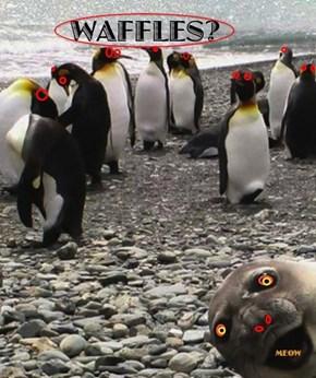 lol Seals