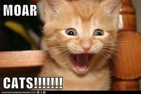 MOAR  CATS!!!!!!!