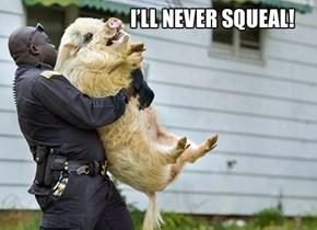 I'm No Rat!
