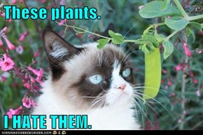 These plants.  I HATE THEM.