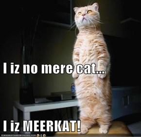 I iz no mere cat... I iz MEERKAT!
