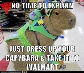 NO TIME TO EXPLAIN  JUST DRESS UP YOUR CAPYBARA & TAKE IT TO WALMART