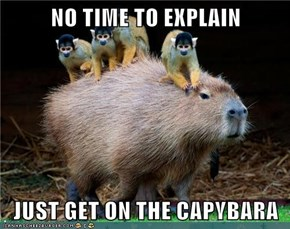 NO TIME TO EXPLAIN  JUST GET ON THE CAPYBARA