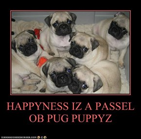 HAPPYNESS IZ A PASSEL OB PUG PUPPYZ