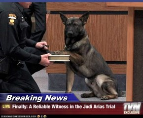 Breaking News - Finally: A Reliable Witness in the Jodi Arias Trial