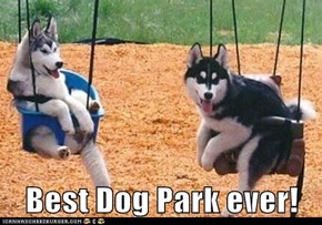 Best Dog Park ever!