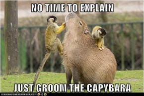 NO TIME TO EXPLAIN  JUST GROOM THE CAPYBARA