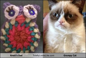 Kristi's Owl Totally Looks Like Grumpy Cat