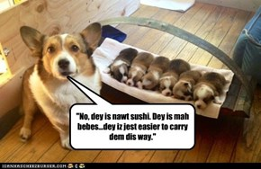 """No, dey is nawt sushi. Dey is mah bebes...dey iz jest easier to carry dem dis way."""