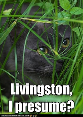 Where U Been, Livingston?