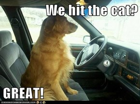We hit the cat?  GREAT!